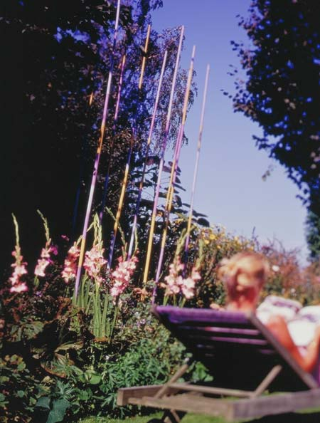 Priscilla Gladiolus - 26107