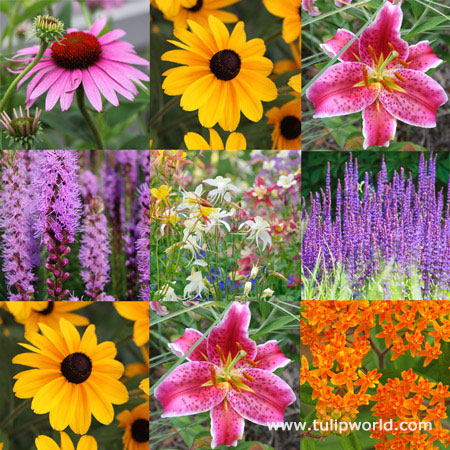 Butterfly Perennial Garden Collection
